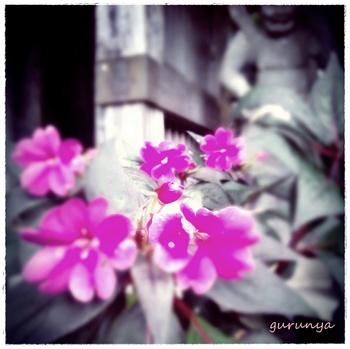 富貴寺 山門の花.jpg